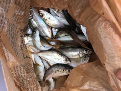 <p>沖の北 7:00最新釣果 小アジ多数</p> <p>一番船でお越しのお客様。釣り開始から6:30頃までに、内向きの比較的浅いタナで小アジが入れ喰いだったとの事。時合は短めですが、数釣りは楽しめますよ♪</p>