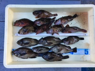 <p>藤本様 沖の北 エビ撒き釣り メバル7尾・ガシラ8尾</p> <p>良型のメバルとガシラをGETされております。依然、根魚の釣果は安定していますね♪ 釣果写真へのご協力、ありがとうございます。</p>