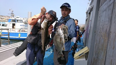 <p>福山様 沖の北 エビ撒き釣り キビレ 43.6cm  山本様 沖の南 エビ撒き釣り ハネ61.0cm ちょっと渋い状況だったようです。それでもグッドサイズをキャッチ♪</p>