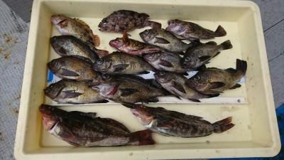 <p>田中様 沖の北 エビ撒き釣り 根魚大漁♪ メバルは最大23cm!おいしそうなアブラメも。</p>