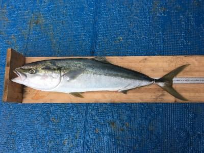 <p>T.I様 沖の北 のませ釣り/活きアジ ブリ92.0cm!!</p> <p>本日1本目のブリが出ましたよ♪ 7時頃に釣れたそうです。釣果写真へのご協力、ありがとうございます。</p>
