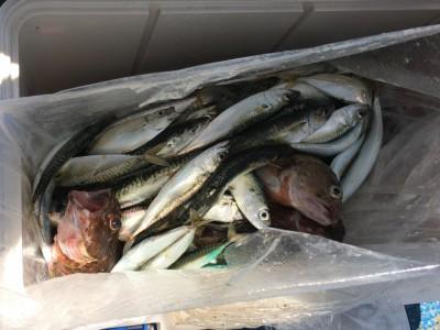 <p>沖の北 サビキ釣り 小サバ多数・豆アジ</p> <p>サビキ釣りでは小サバが順調に釣れており、豆アジも混ざってきますね♪</p>