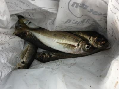 <p>沖の北 7:00最新釣果 中アジ数匹</p> <p>ここ最近釣果の無かった中アジが釣れております。内向きでタナは5ヒロくらいの底付近です。今日はシラサエビを使われている方の釣果ですが、サビキ釣りでも釣れる筈です。</p>