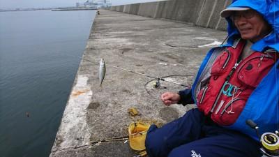 <p>沖の北 サビキで小サバが沢山釣れていました♪ただ今朝は中アジがいなかったようです。</p>