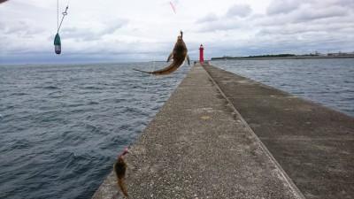 <p>そろそろキスが釣れないかなと調査してきました。旧一文字・赤灯の船着きの沖向き、ちょい投げで餌は石ゴカイです。11時に渡って1投目でがっちょが釣れ、1投1匹ペースで釣れました。周辺を探りましたがまだキスはいないようでしたので、また調査したいと思います。</p>