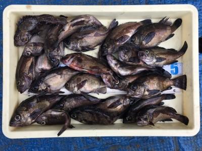 <p>大谷様 沖の北 エビ撒き釣り メバル大漁</p> <p>根魚が好調のようですね!しかも良型ばかりで羨ましい(^^♪おめでとうございます!</p>