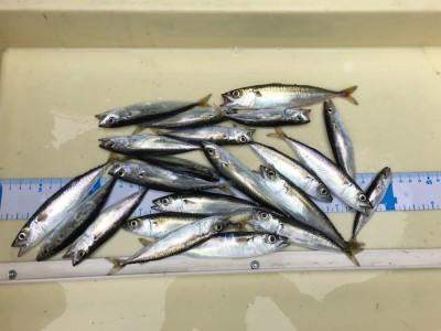 <p>スタッフ谷口 沖の北 サビキ釣り サバ多数</p> <p>調査の為、沖の北へ・・ベイトの回遊はあるので青物もチャンスありです(^^♪</p>