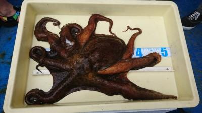 <p>前原様 沖の北 タコ2.5kg 四季の釣り撮影中にヒット!放送日が待ち遠しいですね(^^♪おめでとうございます!!</p>