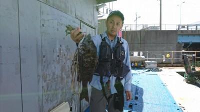 <p>福山様 沖の北 エビ撒き釣り チヌ 44.0cm 今日はちょっと渋いみたいです。</p>
