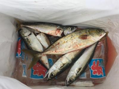 <p>匿名T様 沖の北 ショアジギ・サビキ釣り ツバス・中サバ</p> <p>ショアジギでツバス、サビキで中サバを釣られました。釣果写真へのご協力、ありがとうございます。</p>