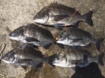 <p>フィッシングマックス二色浜店 岡田さん 旧一文字 白灯 紀州釣り チヌ 32〜42㎝5枚、20〜27㎝4枚、キビレ25㎝2枚 サシエはオキアミ、練り餌、むきえび  紀州釣り・フカセ釣りの釣果が安定してきました!夏チヌ好調です♪</p>
