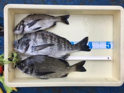 <p>矢野様 沖の北 落とし込み釣り チヌ40.5cmまでを5枚(リリース2枚)</p> <p>沖の北の外向き・内向きの両方で釣られております。いつも釣果情報提供にご協力頂き、ありがとうございます。</p>