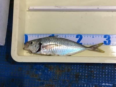 <p>田中(成)様 沖の北 サビキ釣り アジ29cm</p> <p>今日のアジは少しご機嫌斜めでしたが、尺に迫る良型をGETされております。いつも釣果写真にご協力頂き、ありがとうございます。</p>