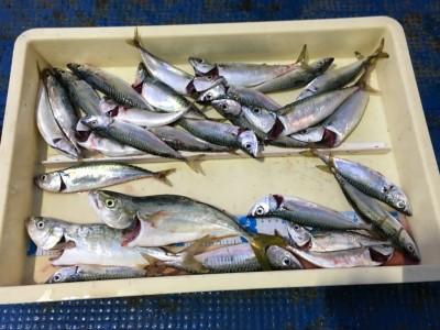 <p>豊田様 沖の北 サビキ釣り ツバス2匹・サバ多数</p> <p>大アジらしき獲物にハリスをぶち切られたとの事。惜しい~</p> <p>釣果写真へのご協力、ありがとうございます。</p>