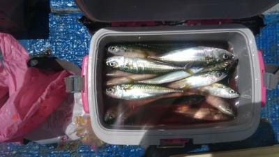 <p>中山様 沖の北 サビキ釣り 中サバ大漁</p> <p>サバも型が良くなってきてますね!小アジも釣られていました。ファミリーで楽しむのは丁度よさそうです(^^♪</p>