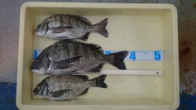 <p>内田様 中波止 紀州釣り チヌ39cmを筆頭に3尾GET!</p> <p>紀州釣りも好釣果をキープです!しかも女性アングラーの釣果です(^^♪おめでとうございます</p>
