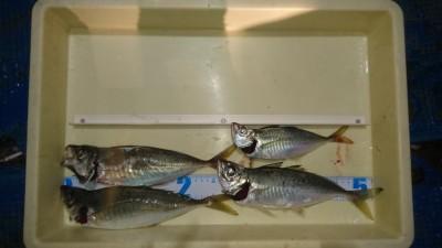 <p>津田様 沖の北 サビキ釣り 良型アジGET!</p> <p>昨日程の回遊は無かったようですが、本日も良型アジの釣果ありました(^^♪おめでとうございます!</p>
