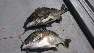 <p>もちろん釣果もばっちり♪40cm後半もあがっているようでした。</p>