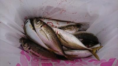 <p>沖の北 エビ撒き釣りで中アジ大漁♪1番船で渡ってから1時間くらいはアジの時合だったそうです。</p>
