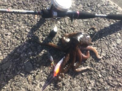 <p>またまたマックスの若杉さん 沖の北でタコも釣ってくれました♪</p>