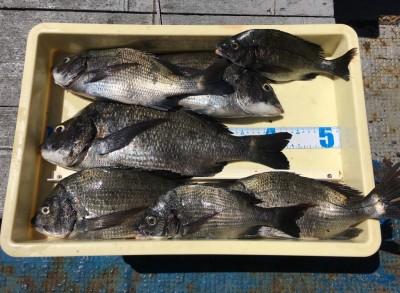 <p>濱本様 沖の北 フカセ釣り/オキアミ・コーン チヌ44.0cmまでを7枚!!</p> <p>フカセ釣りが良い感じですね♪ エサ取りのサバを回避する為に途中からコーンを使って攻略されています。いつも釣果情報提供にご協力頂き、ありがとうございます。</p>