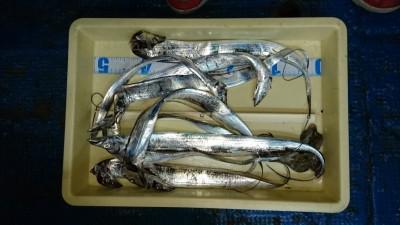 <p>大東市の方 引き釣り タチウオ多数GET</p> <p>状況はあまり良くなかった中で、多数GETですね(^^♪</p>