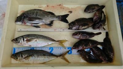 <p>川原様 沖の北 エビ撒き釣り 尺アジ&amp;根魚&amp;チヌ 嬉しいお土産ゲットですね♪</p>