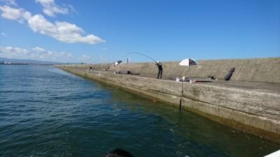 <p>今日は大会の下見で紀州釣りの方が旧一文字に沢山並んでいました♪小さいのが多いようですが40㎝後半を釣っているかたもいましたよ。</p>