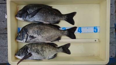 <p>伊丹様 旧一文字 紀州釣り チヌ~39cmまで5尾GET</p> <p>小さい2尾はリリースされたそうです。おめでとうございます</p>