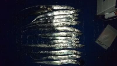 <p>平地様 沖の北 ワインド タチウオ多数GET</p> <p>こちらも好釣果!おめでとうございます</p>