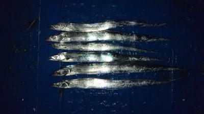 <p>甲斐田様 沖の北 ワインド タチウオ多数GET</p> <p>完全に新しい群れですね♪おめでとうございます!</p>