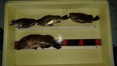 <p>吉村様 沖の北 エビ撒き 良型アコウ/メバルGET</p> <p>根魚もまだまだ狙えます!おめでとうございます</p>