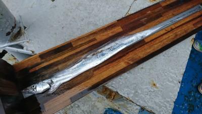 <p>沖の北 ショアジギ タチウオ 87.5㎝!いいサイズだったんですがダービーサイズ更新ならず、残念~。</p>