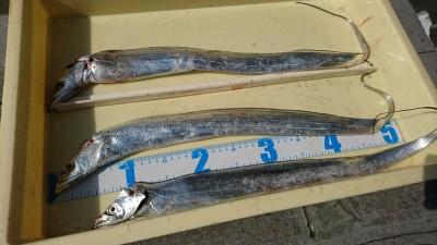 <p>中川様 沖の北 ワインドでタチウオ!まわりでサゴシも釣れていたそうです。</p>