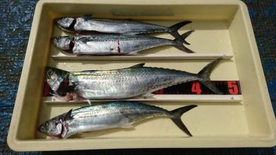 <p>今中様 沖の北 ショアジギでサゴシ4匹!8時頃にヒットしたそうです。朝タチウオのアタリもあったそうですが、釣果にはつながらず。</p>