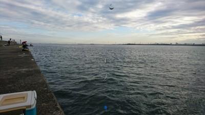 <p>リアルタイム 沖の北 サビキ釣りで小アジ!5時半頃は鈴なりで釣れていました。のませ釣りにはちょうどいいサイズ。</p>