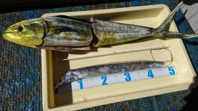 <p>松田様 沖の北 のませ釣りで78㎝のシイラ!6時頃にヒット。</p>