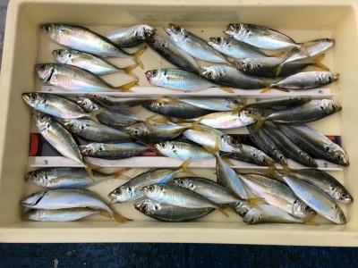 <p>富田林市のH様 沖の北 飛ばしサビキ 小アジ大漁</p> <p>ファミリーフィッシングに最適なターゲットが大漁です。明日からの3連休にもってこいですよ♪ 釣果写真へのご協力、ありがとうございます。</p>