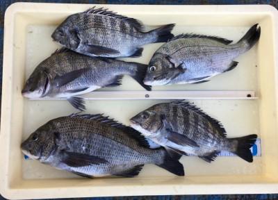 <p>K様 旧一文字(白灯) 紀州釣り/コーン・ネリエ チヌ36.0cmまでを30枚(リリース含む)</p> <p>旧一文字での紀州釣りも安定した釣果です。釣果写真へのご協力、ありがとうございます。</p>