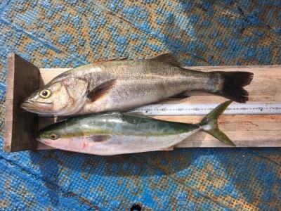 <p>中山様 沖の北 のませ釣り ハネ71cm・メジロ64cm</p> <p>体高のあるグッドコンディションのハネが釣れましたよ。加えてメジロも!! いつも釣果情報提供にご協力頂き、ありがとうございます。</p> <p>&nbsp;</p>