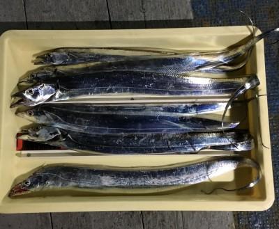 <p>那須様 沖の北 メタルジグ・ワインド タチウオ7匹</p> <p>指3本半サイズも混じっています。時合は6時頃からとの事です。いつも釣果情報提供にご協力頂き、ありがとうございます。</p>
