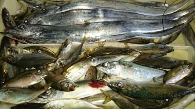 <p>尾田様 沖の北 ウキ釣り/サビキ タチウオ/サバ/アジGET</p> <p>魚種多彩に釣れていますね(^^♪おめでとうございます!</p>