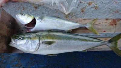 <p>山出様 沖の北 のませ釣り メジロ/ブリGET</p> <p>いつも安定して青物釣られてます!流石です(^^♪</p>