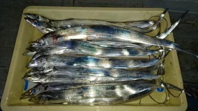<p>橋本様 沖の北 ウキ釣り タチウオ多数GET</p> <p>釣果情報のご協力ありがとうございます(^^♪!</p>