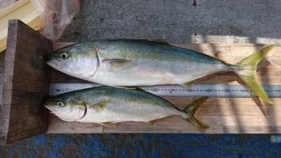 <p>山出様 沖の北 のませ釣り メジロ/ハマチGET</p> <p>安定の青物釣果!流石ですね(^^♪</p>