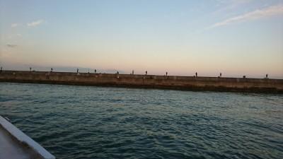 <p>台風後の気になる釣果は!? サビキ釣りでは小アジが釣れていました。朝タチウオもぼちぼちな感じ。サゴシも釣れていましたよ。</p>