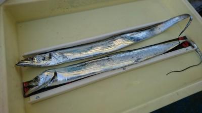 <p>北野様 沖の北 ドジョウ/引き釣りでタチウオ!まわりでサゴシも釣れていたようです。</p>