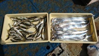 <p>松崎様 沖の北 タチウオゲッターでタチウオ16匹!サビキで小アジ大漁!今朝はタチウオいい感じでした。</p>