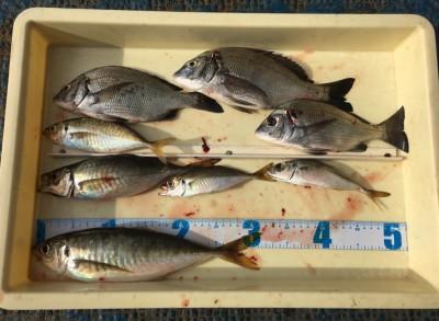 <p>今中会長 沖の北 エビ撒き釣り 大アジ31cm・中アジ・小アジ・チヌ</p> <p>今日は良型のアジが回遊しているかもですね♪ いつも釣果情報提供にご協力頂き、ありがとうございます。</p>