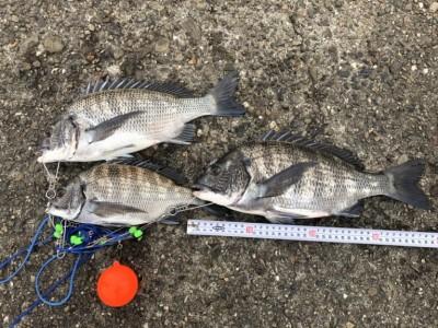 <p>フィッシングマックス スタッフ林様 旧一文字 赤灯 フカセ釣りでチヌ3枚!餌取りはまだ多くオキアミは残らないようです。コーン必須ですね。</p>